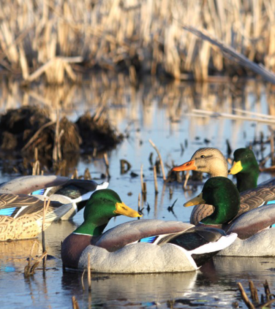 Proposed Mississippi Migratory Bird Hunting Seasons 2016-2017