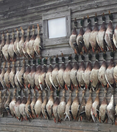 How to Pick Your Next Duck Guide! Part 1