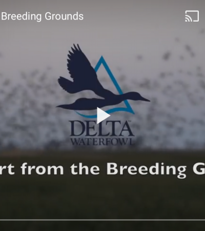 Delta Waterfowl: Early April Breeding Ground Updates