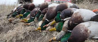 When Is The Best Time To Book A Guided Duck Hunt In The South?