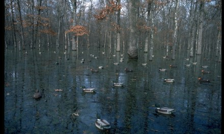 Thoughts on Flooded Timber Duck Hunting