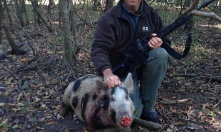 Hog Wild When It is Not Duck Season