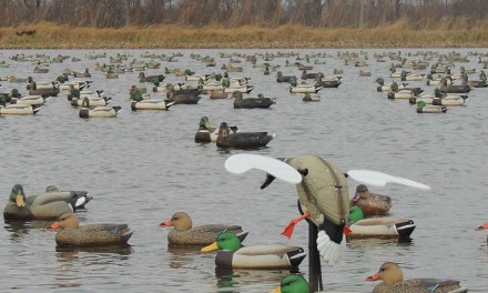 How Many Decoys Do I Need When Duck Hunting