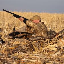 A Shooting Tip When Hunting From A Layout Blind