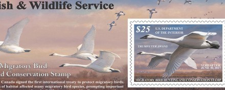 Announcing The 2016-2017 Federal Duck Stamp