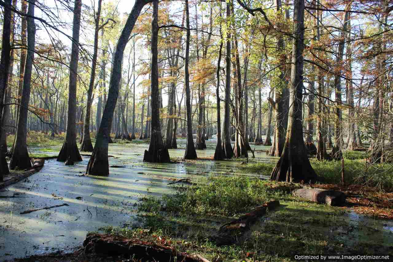 Mississippi Duck Hunting Property for Sale