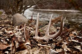 4 Corner Properties: On The X Podcast: Secrets to Shed Hunting