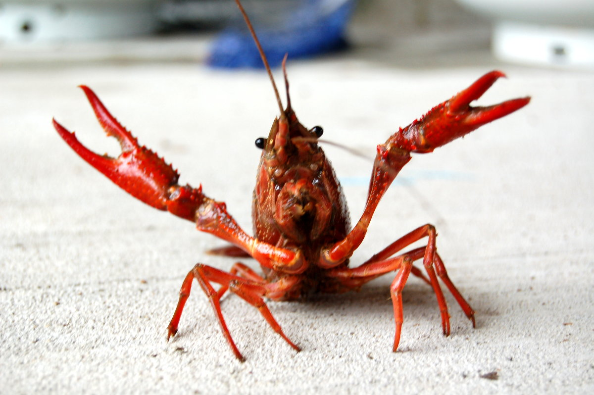 What is the Best Recipe for Cooking Crawfish?